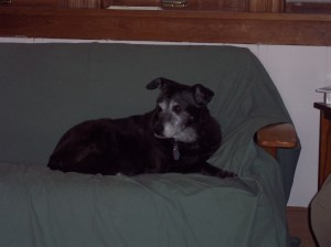 Our late dog, Cocoa. A cherished friend